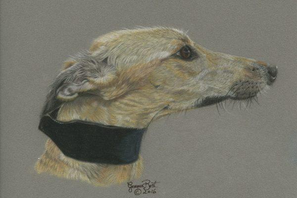 greyhound2