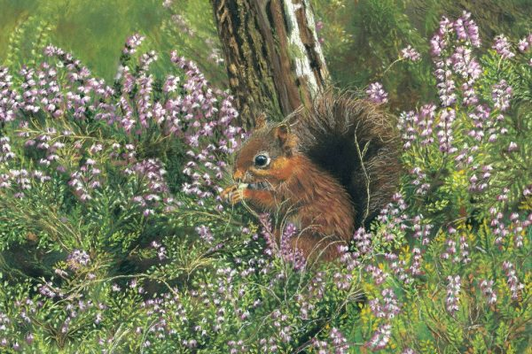 squirrell (1)